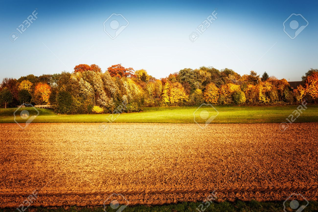 Gold agricultural field with trees and clear sky. Autumn landscape. Beauty in nature Stock Photo - 48077415