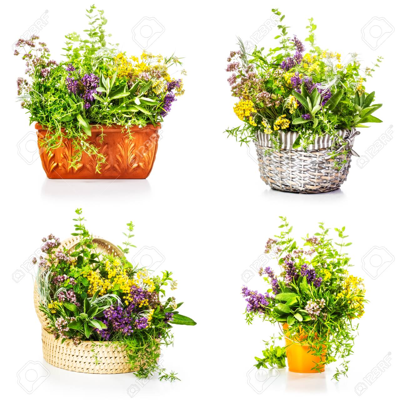 Garden herbs and flowers in container collection isolated on stock garden herbs and flowers in container collection isolated on white background stock photo 56600815 mightylinksfo