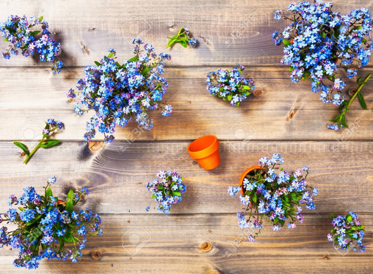 Flower On Wooden Background Bunch Of Small Blue Forget Me Not
