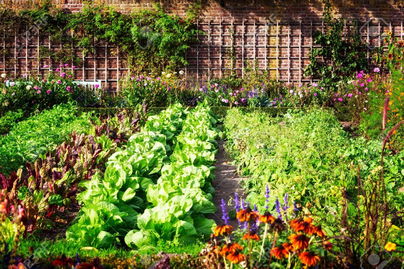 Potager En Fin D Ete Herbes Fleurs Et Legumes Dans La Cour Jardin