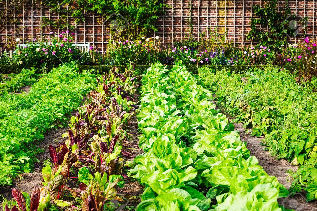 Beau Vegetable Garden In Late Summer. Herbs, Flowers And Vegetables In Backyard  Formal Garden.