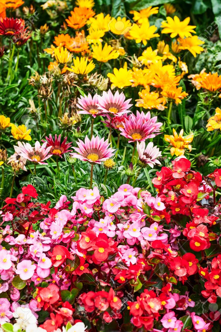 Colorful Flower Garden Background In Summer Flower Bed With