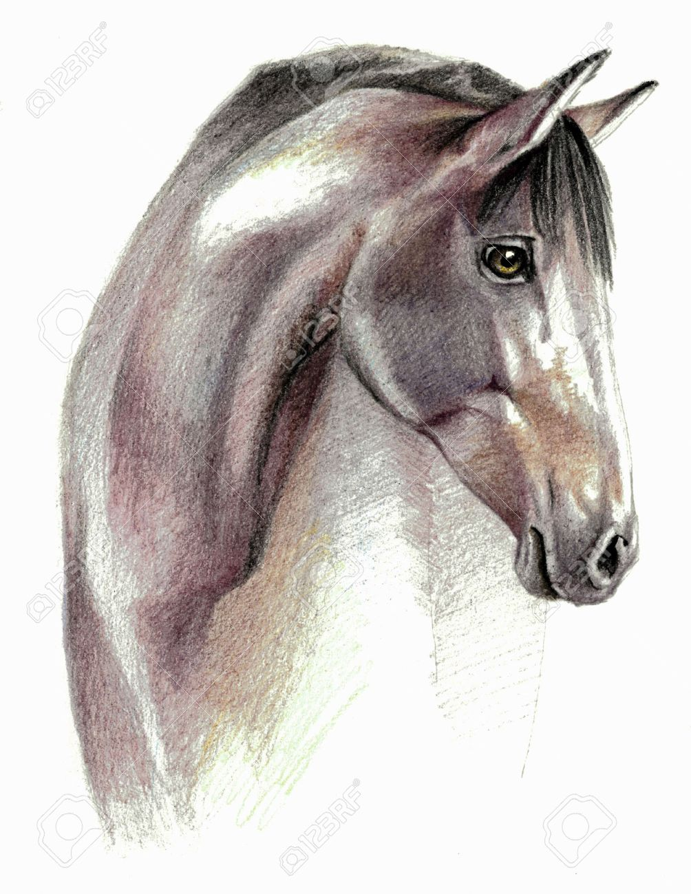 Color Sketch Horse Profail On White Background Detailed Pencil Stock Photo Picture And Royalty Free Image Image 52914833