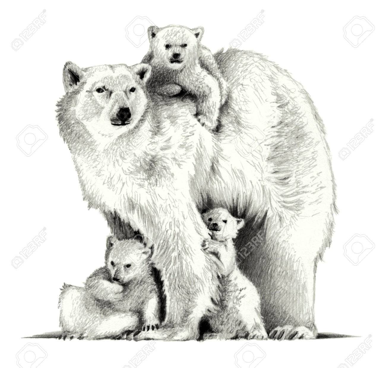 Polar bear with three cubs pencil sketch