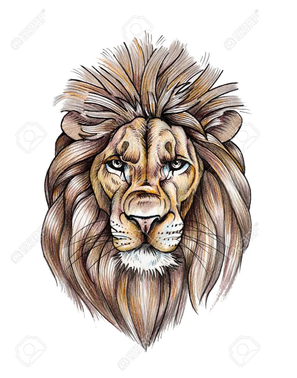 Retrato De Un Hermoso León Dibujo A Lápiz De Color Fotos Retratos