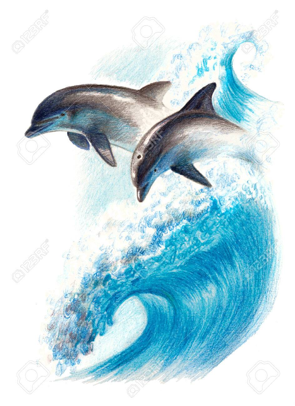 921f024f01d Color drawing: two dolphins on a wave. Watercolor pencils Stock Photo -  75014800
