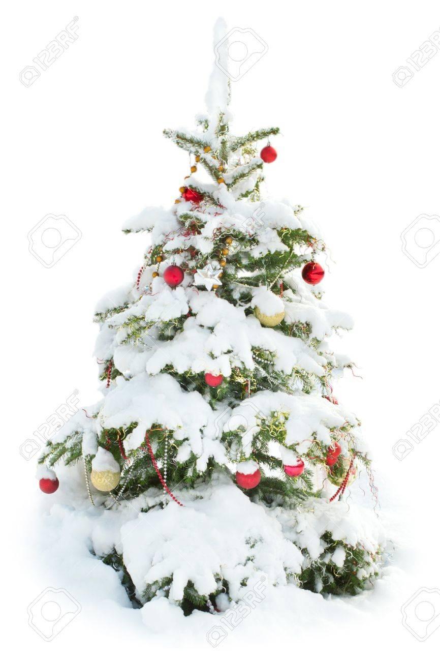 Bildergebnis für geschmückter weihnachtsbaum im schnee