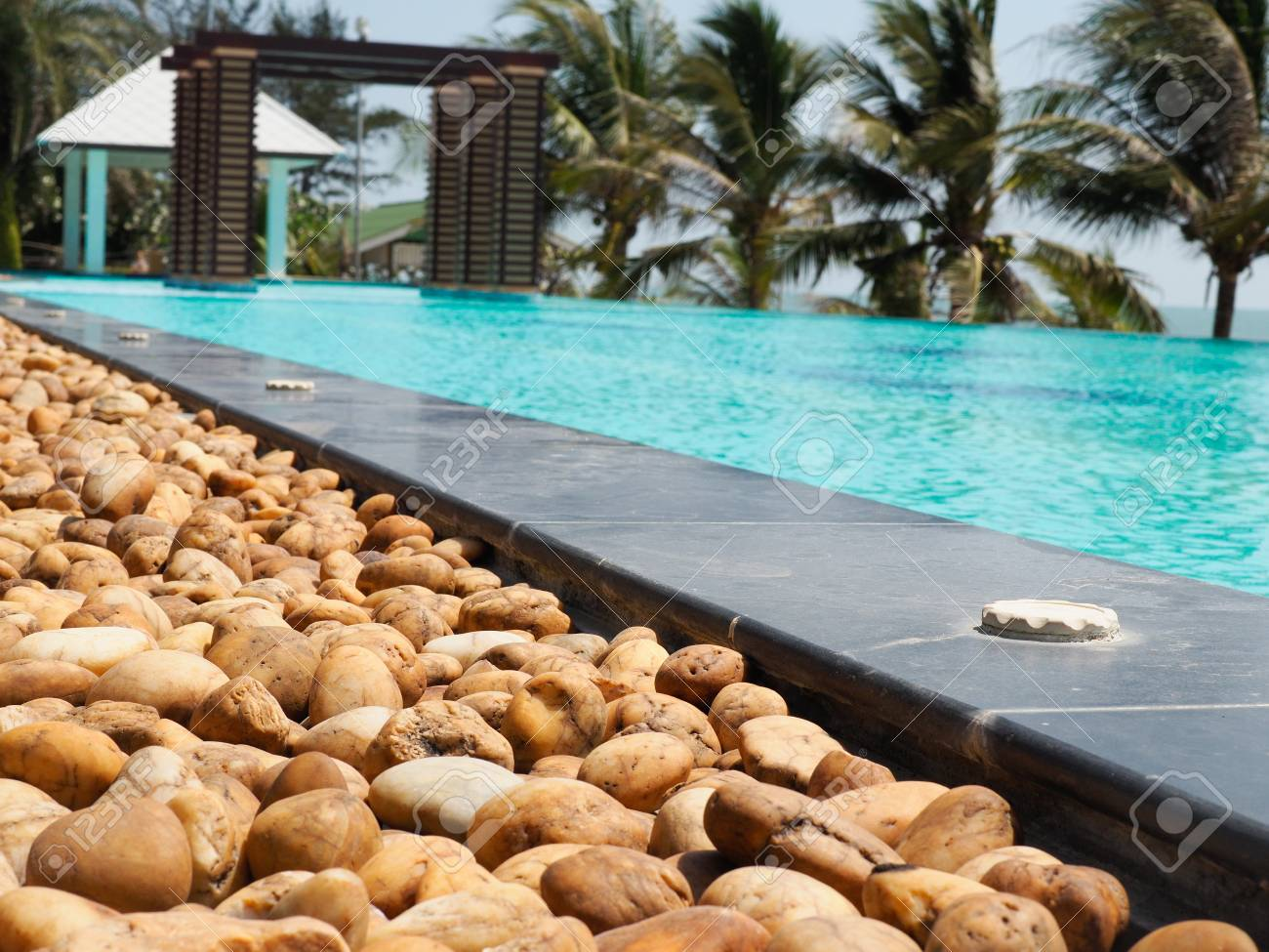 swimming pool with rocks and palm