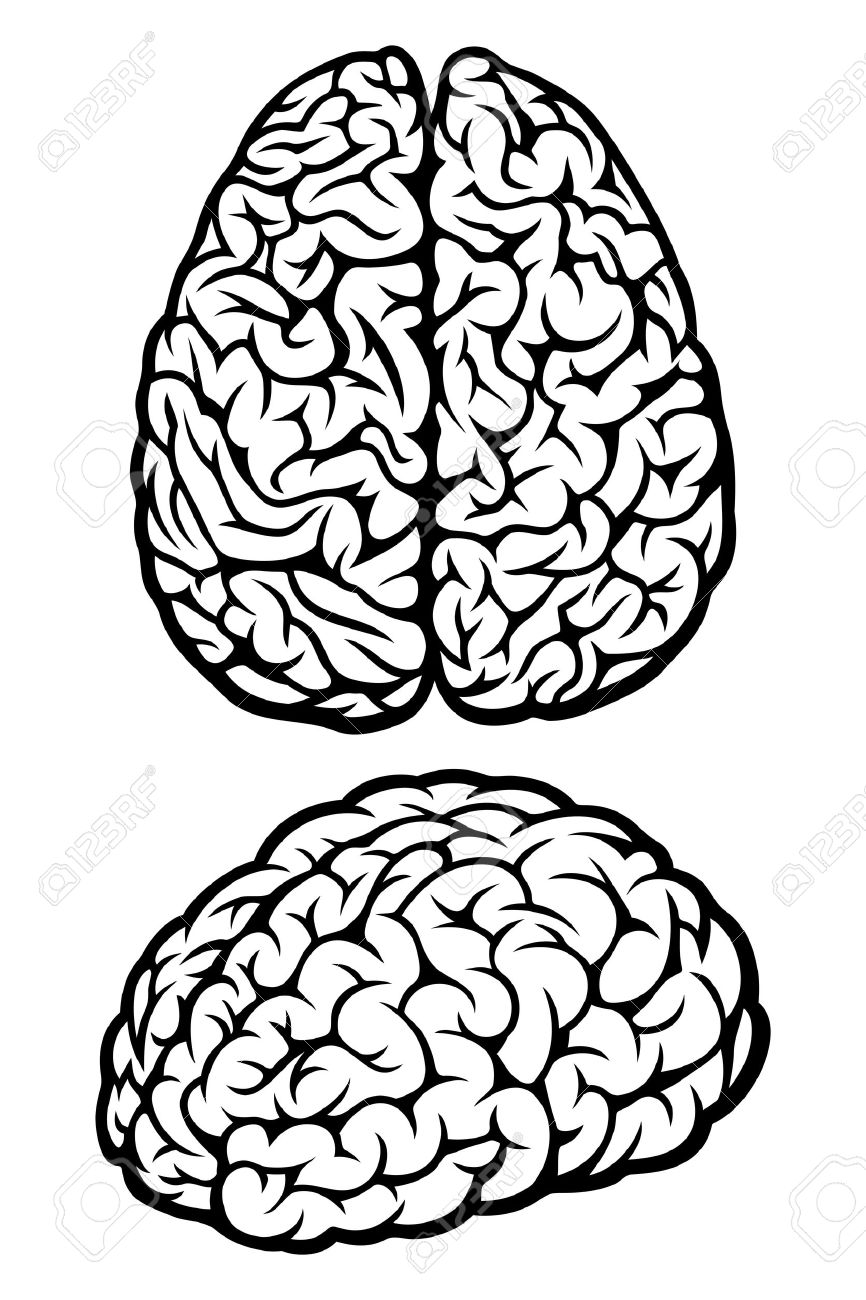 brain vector illustration royalty free cliparts vectors and stock rh 123rf com brain vector png brain vector icon