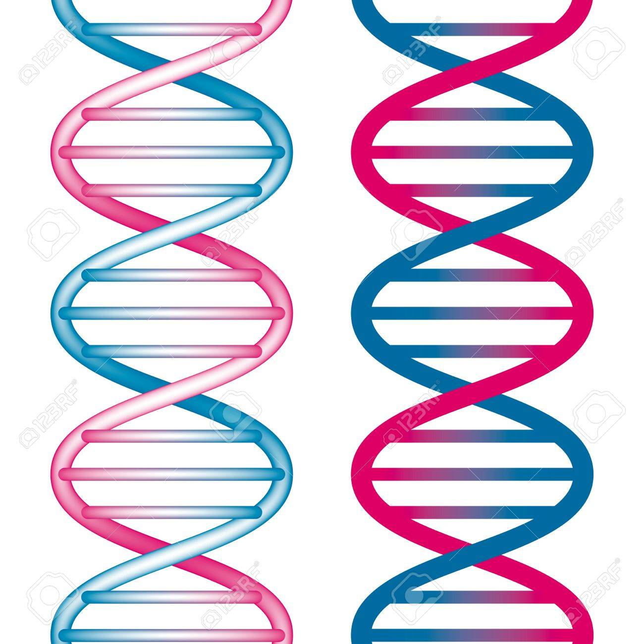 Seamless DNA Symbol on white background. Vector Illustration Stock Vector - 10508726
