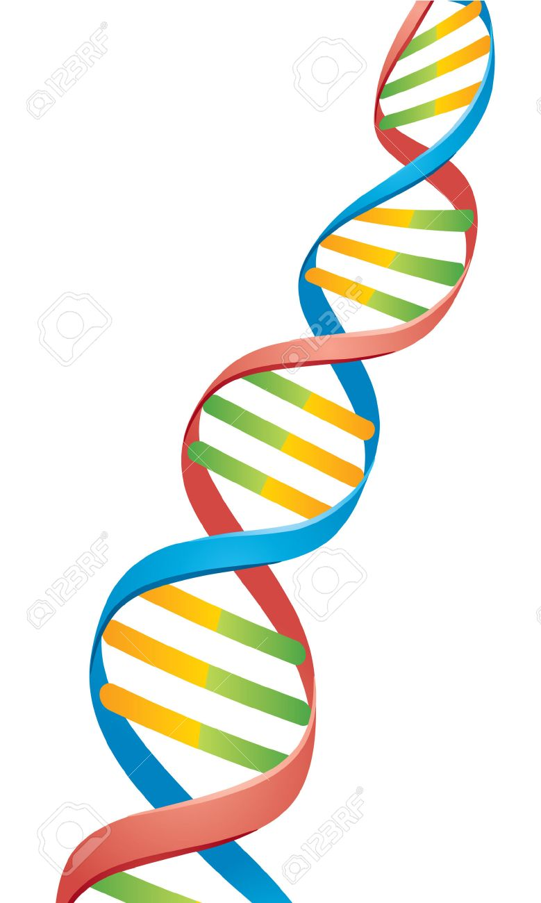 Vector illustration of a Double Helix DNA Strand. Stock Vector - 5313528