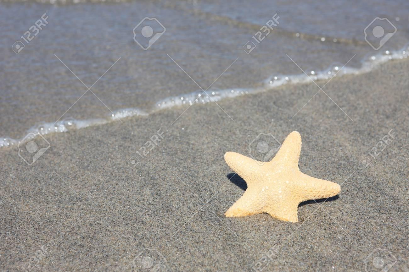 a sea star on the beach Stock Photo - 7410059