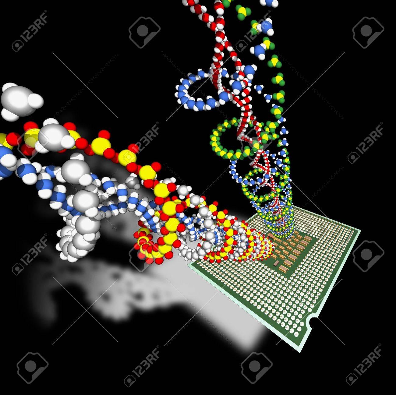 Microprocessor calculates DNA's molecules. Stock Photo - 6676868