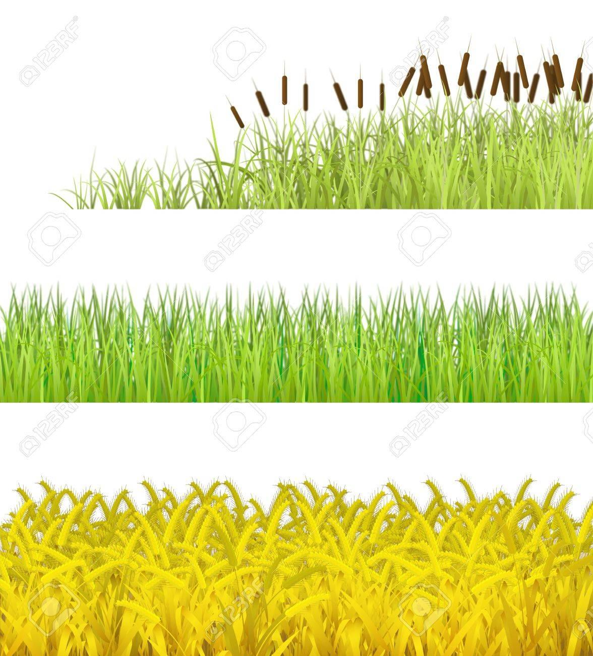 Plant isolated on white background, are shown in the picture Stock Photo - 12814510