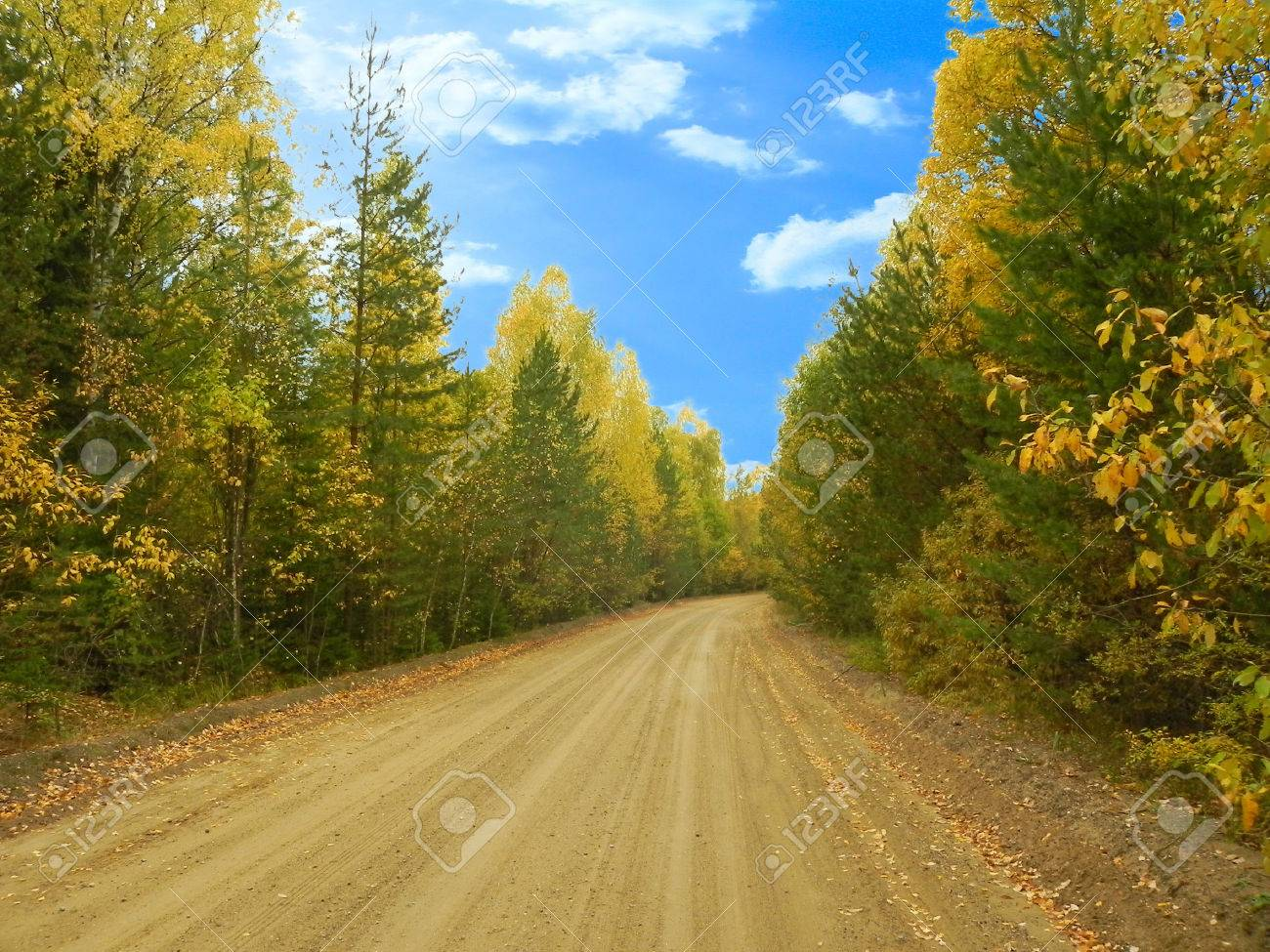 Forest road and autumn forest. - 32442712