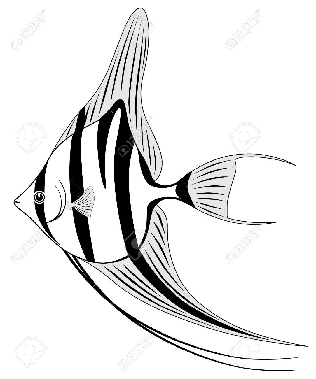 Angel fish Stock Vector - 6987522