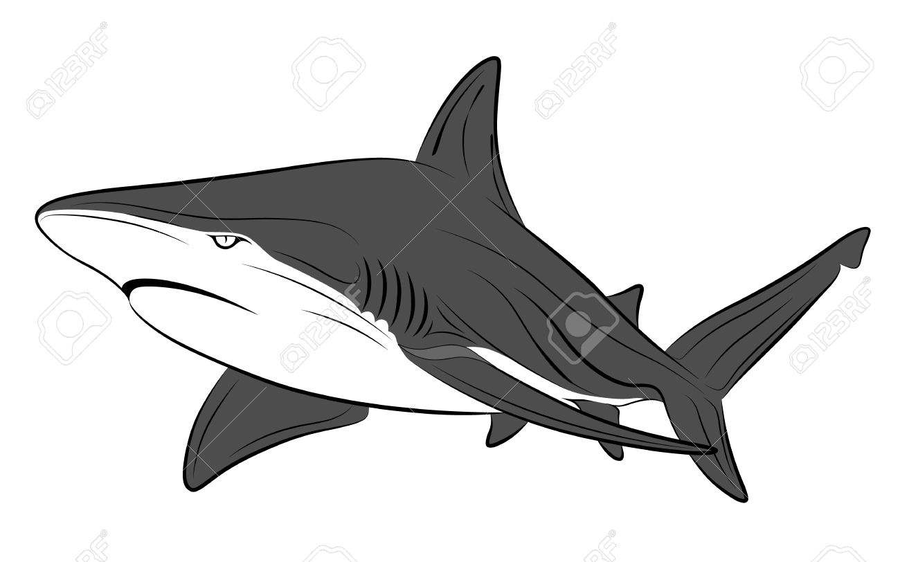 Shark Tattoo Royalty Free Cliparts Vectors And Stock Illustration