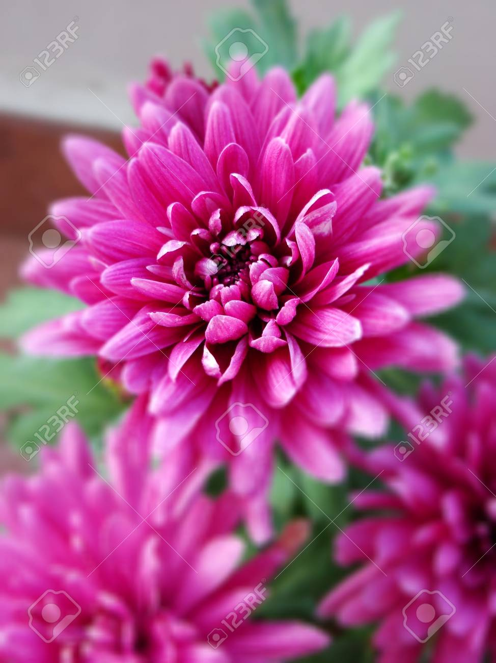 Pink flower - shallow focus Stock Photo - 4140790