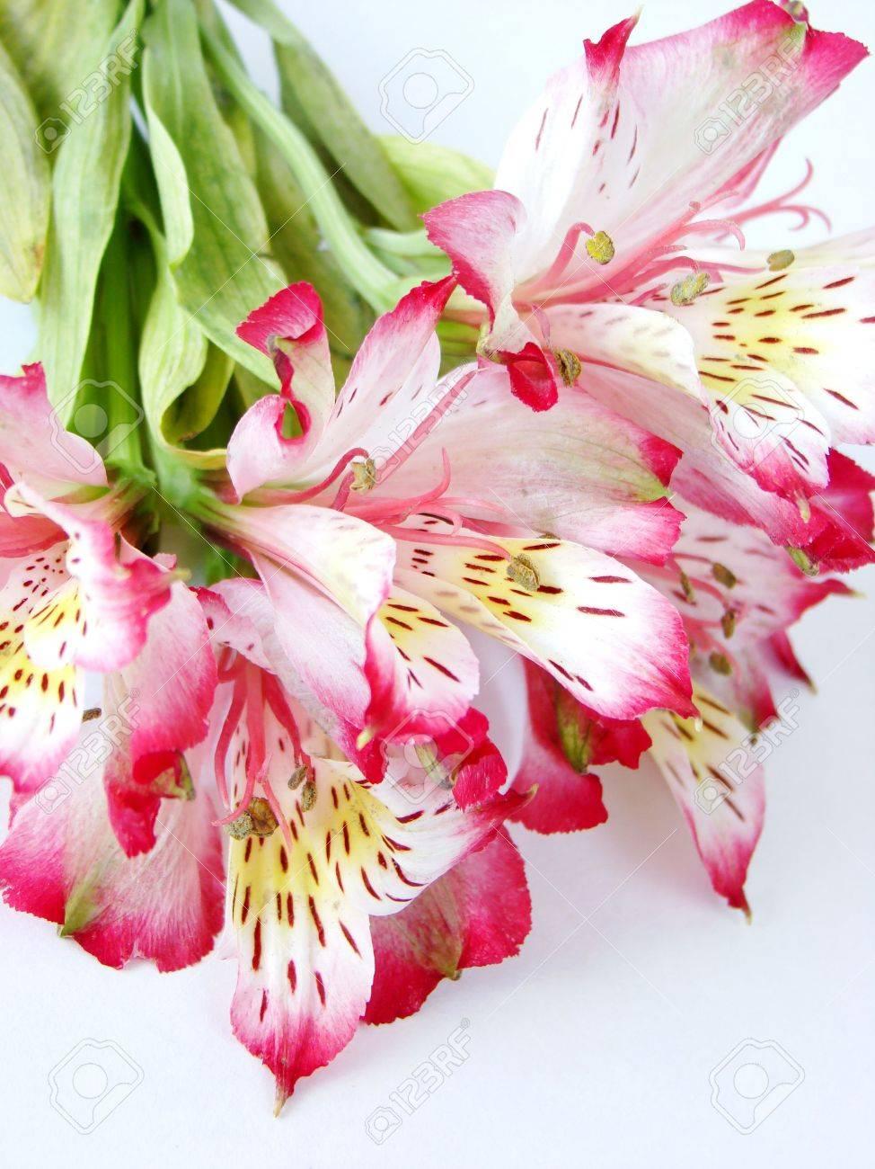 Super Rose Fleur Blanches – Idée d'image de fleur PN43