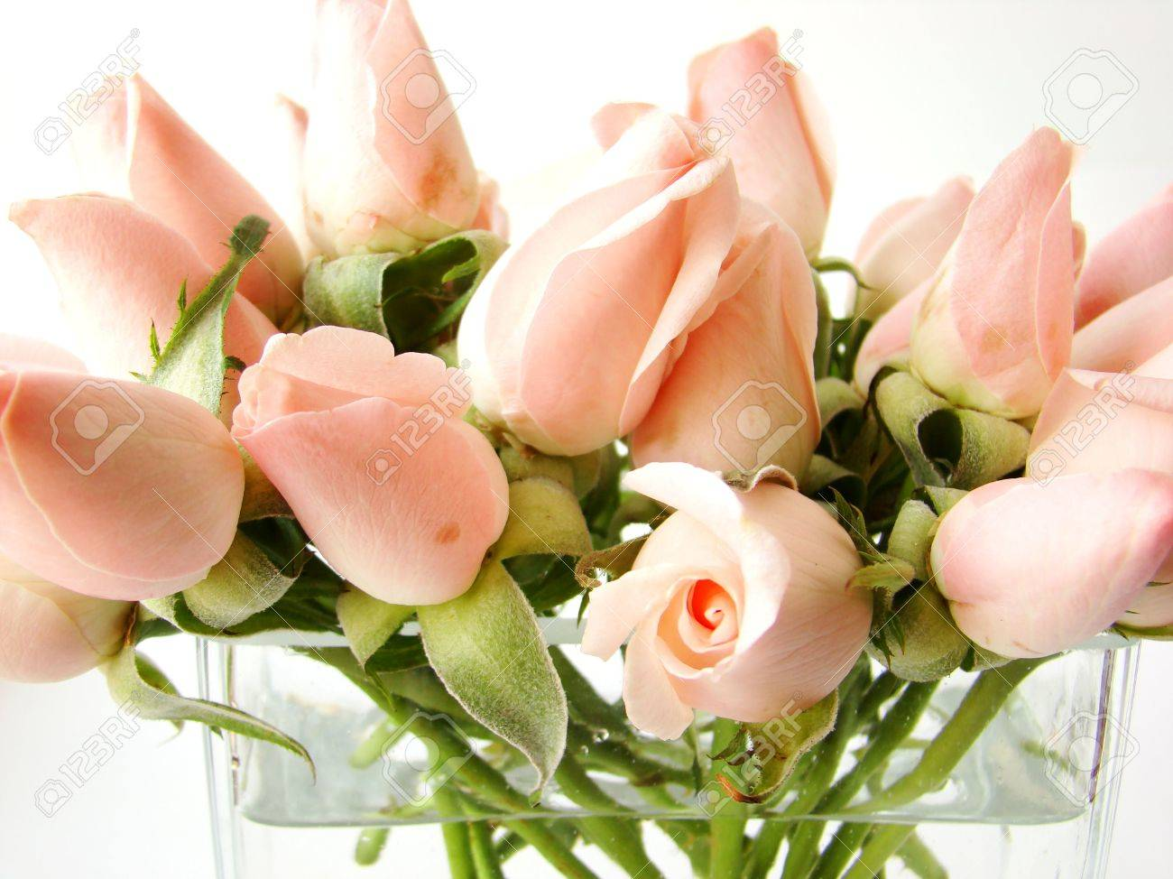 Little Pink Roses Bouquet On Vase - White Background Stock Photo ...