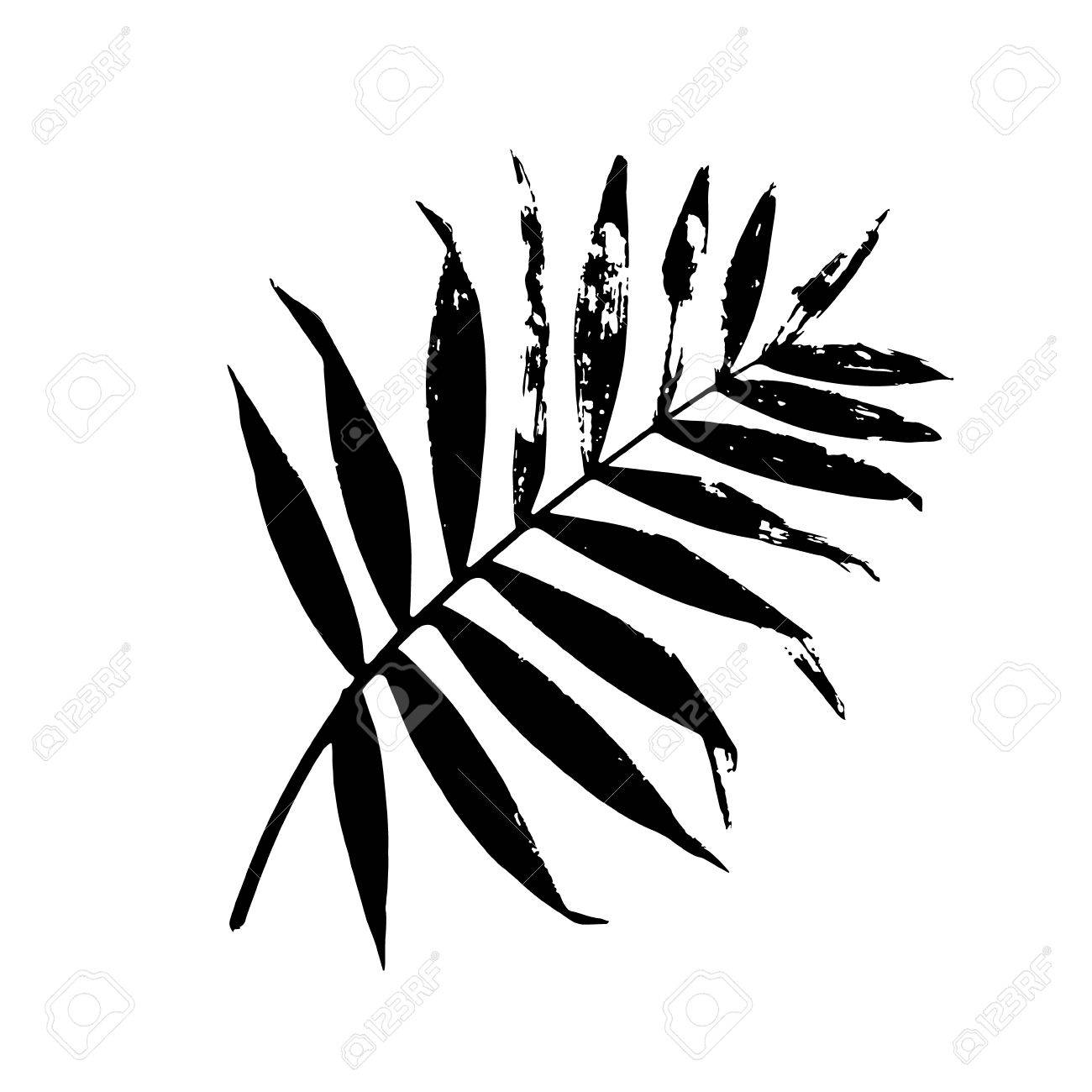 Palm leaf vector illustration black and white palm leaf silhouette isolated palm leaf