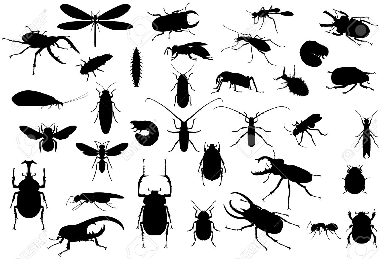 silhouettes of different insects on white royalty free cliparts