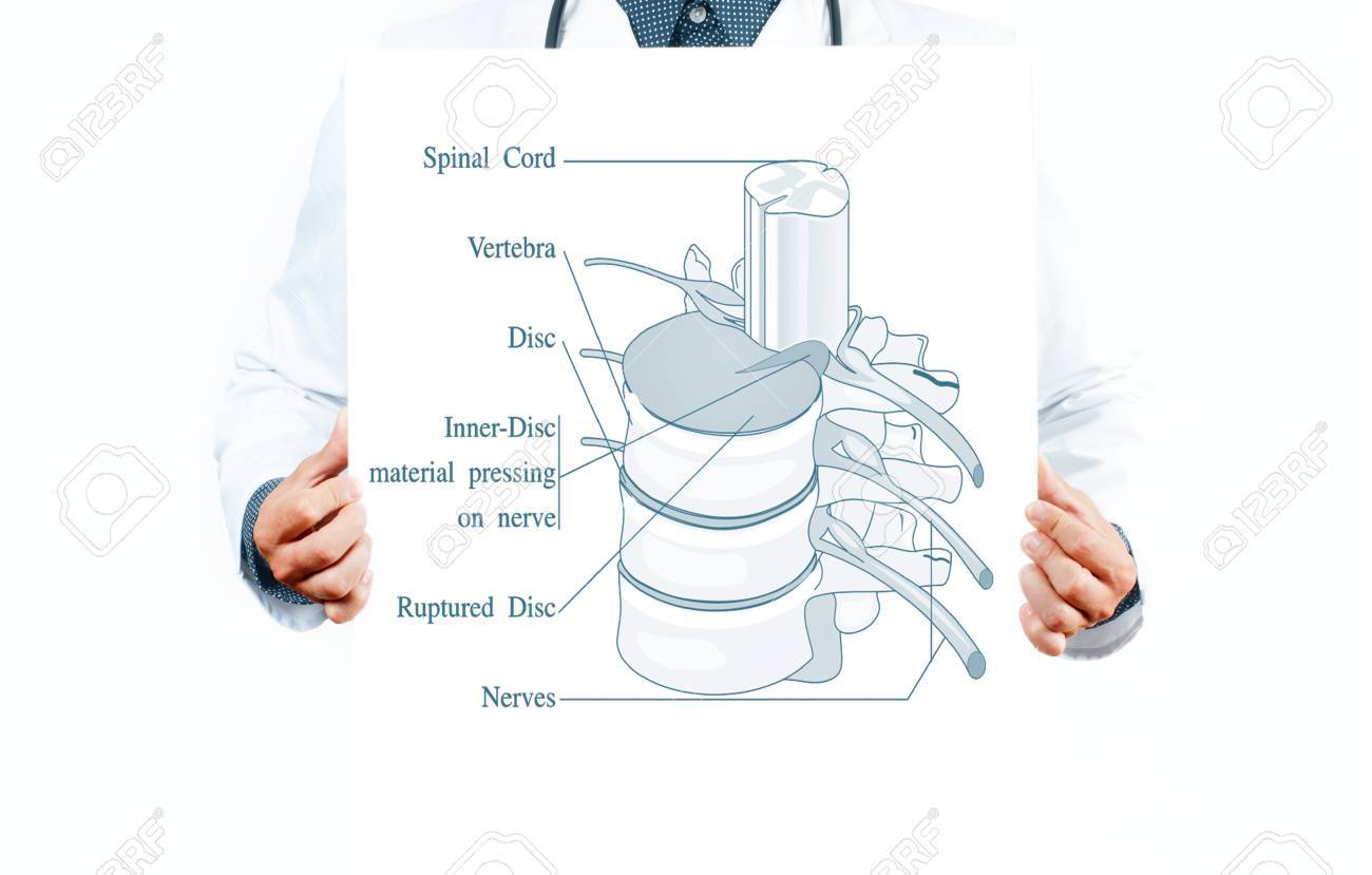 Medicine And Anatomy. Doctor And Anatomical Spine. Facet Joints ...
