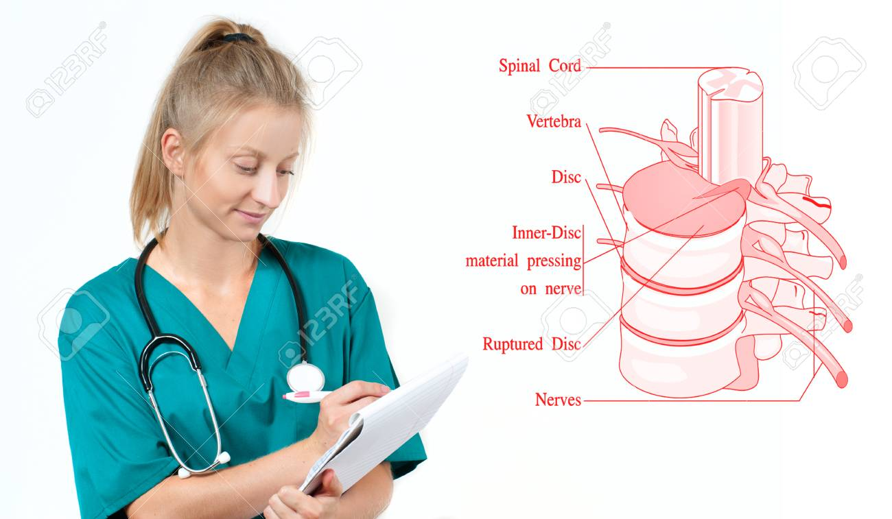 Medicine And Anatomy Doctor And Anatomical Spine Facet Joints