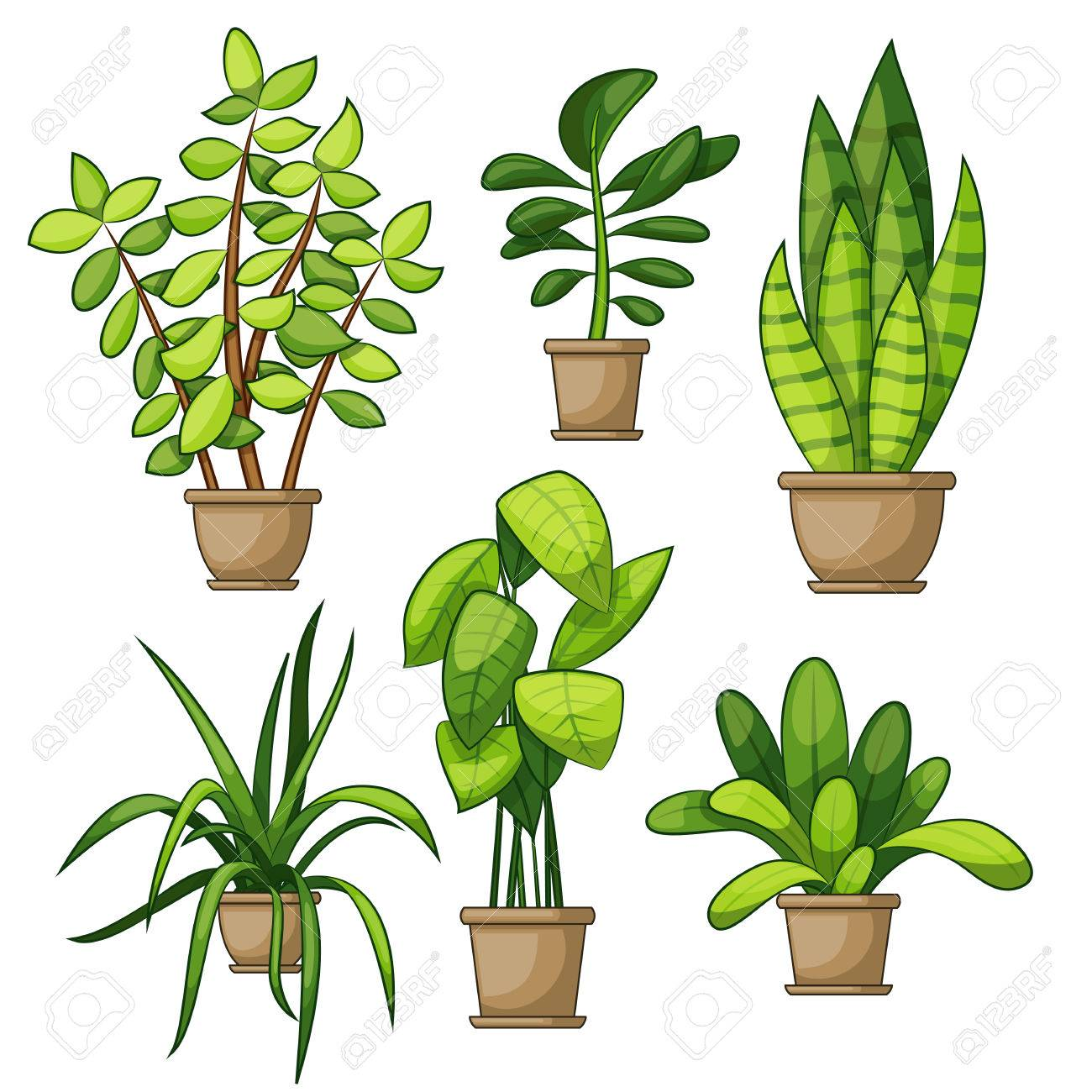 Set Of Different House Plants Royalty Free Cliparts Vectors And Stock Illustration Image 78108172