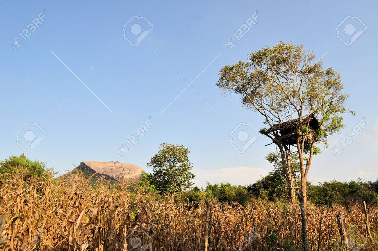 Pidurungala Rock With A Tree House To Escape Wild Elephants In