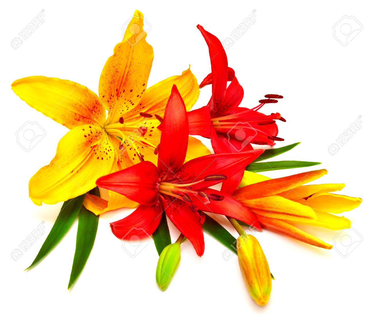 Bouquet of lilies red and yellow flowers isolated on white bouquet of lilies red and yellow flowers isolated on white background the holiday greeting card izmirmasajfo Gallery