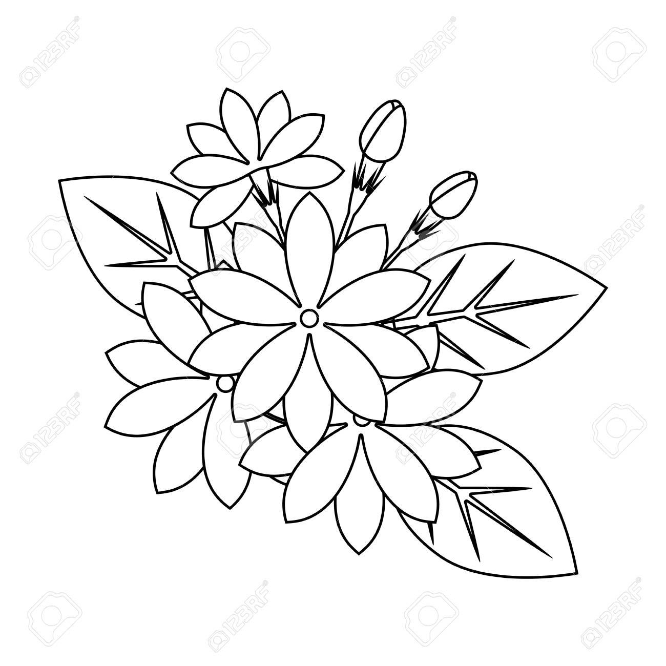 - Jasmine Flowers Outline For Coloring Book, Beautiful Floral Vector
