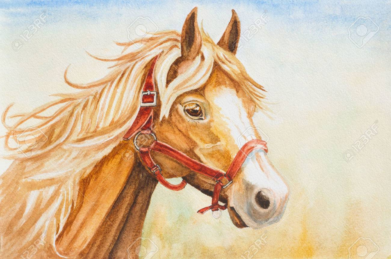 Watercolor Horse Head Illustration Stock Photo Picture And Royalty Free Image Image 59041338