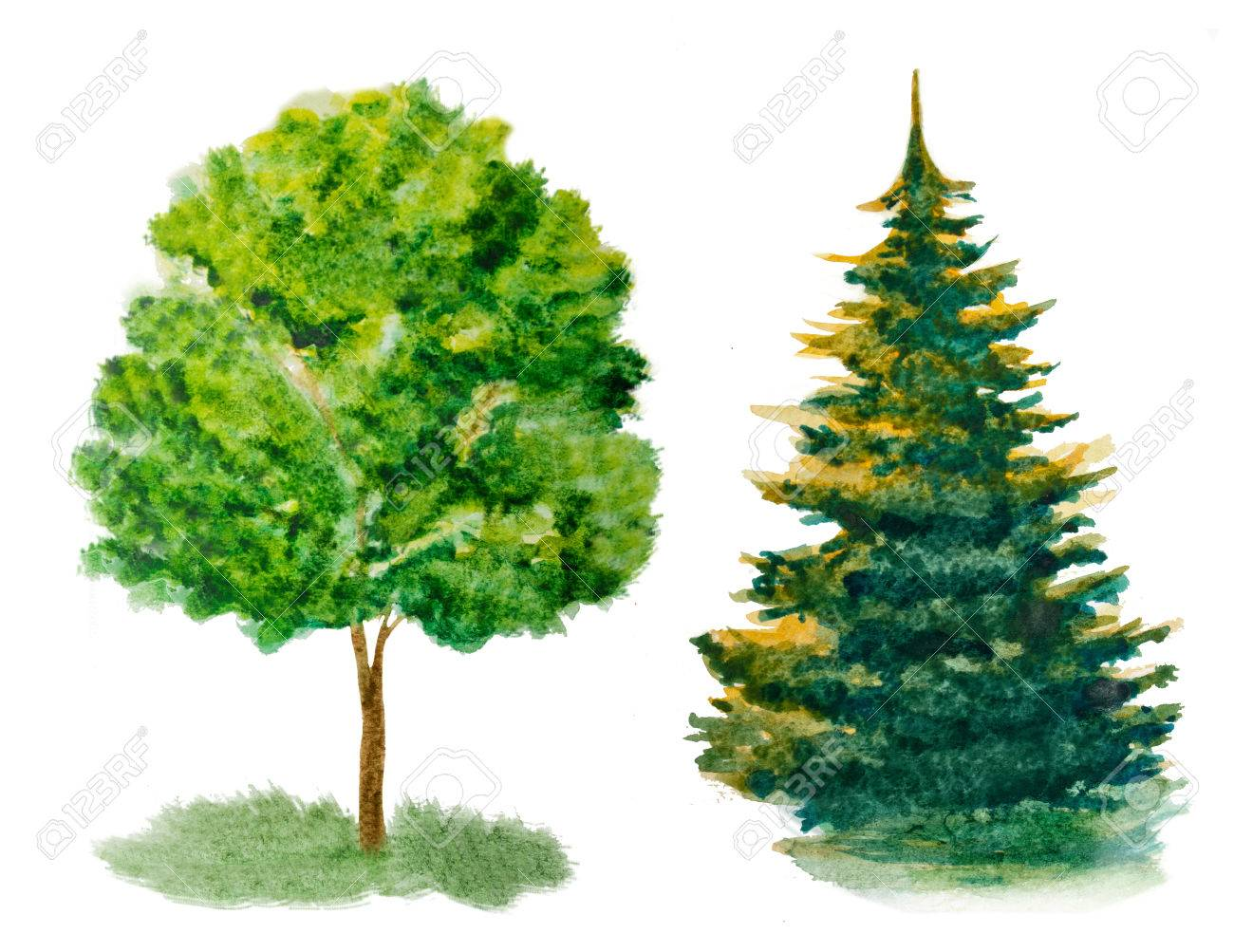 Set Of Watercolor Trees Isolated On White Stock Photo, Picture And ...