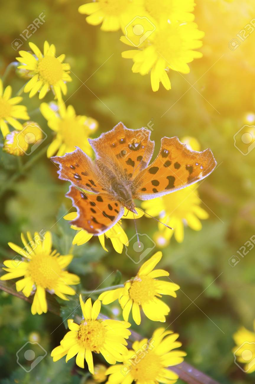 Butterfly on the flower Stock Photo - 23431431