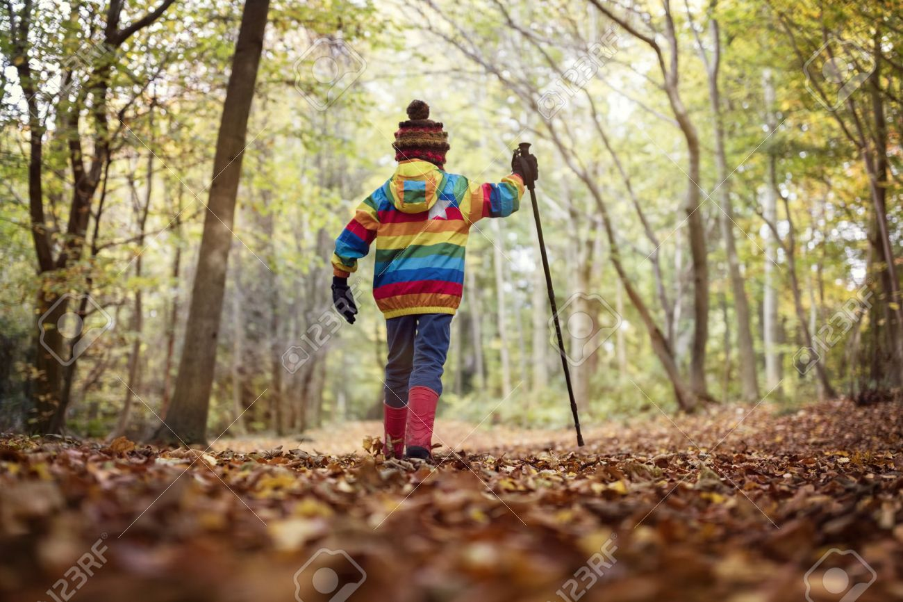 Boy walking with a hiking pole in a forest in autumn or winter Standard-Bild - 48355398