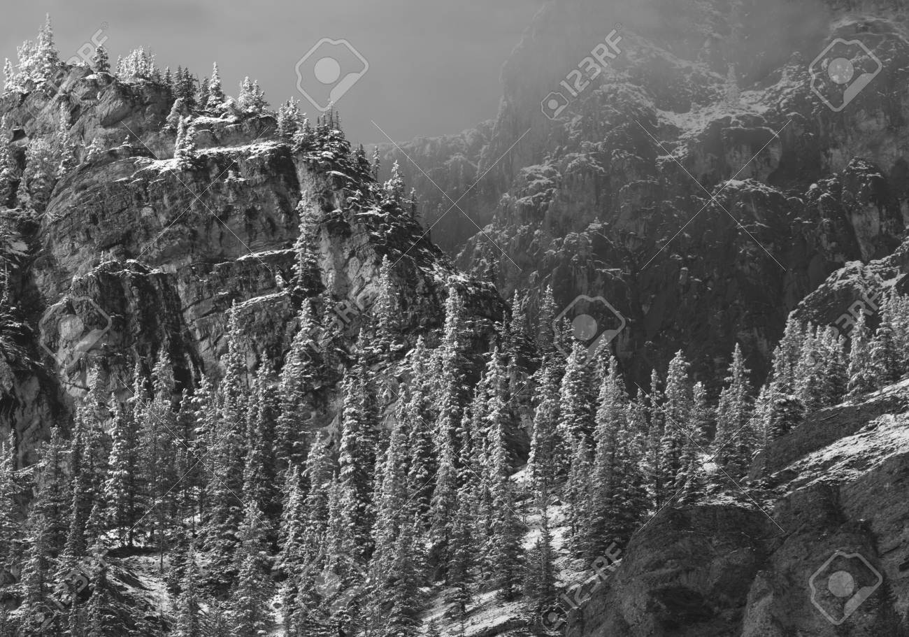 Black and white photograph of snow on trees and mountains of bow valley provincial park in