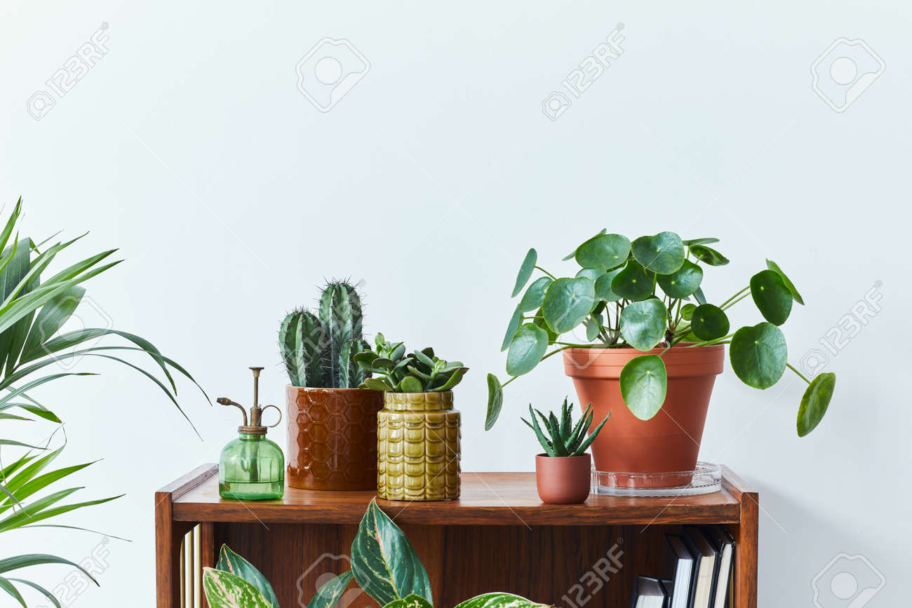 Stylish composition of home garden interior filled a lot of beautiful plants, cacti, succulents, air plant in different design pots. White wall. Copy space. Home gardening concept Home jungle. - 168356327