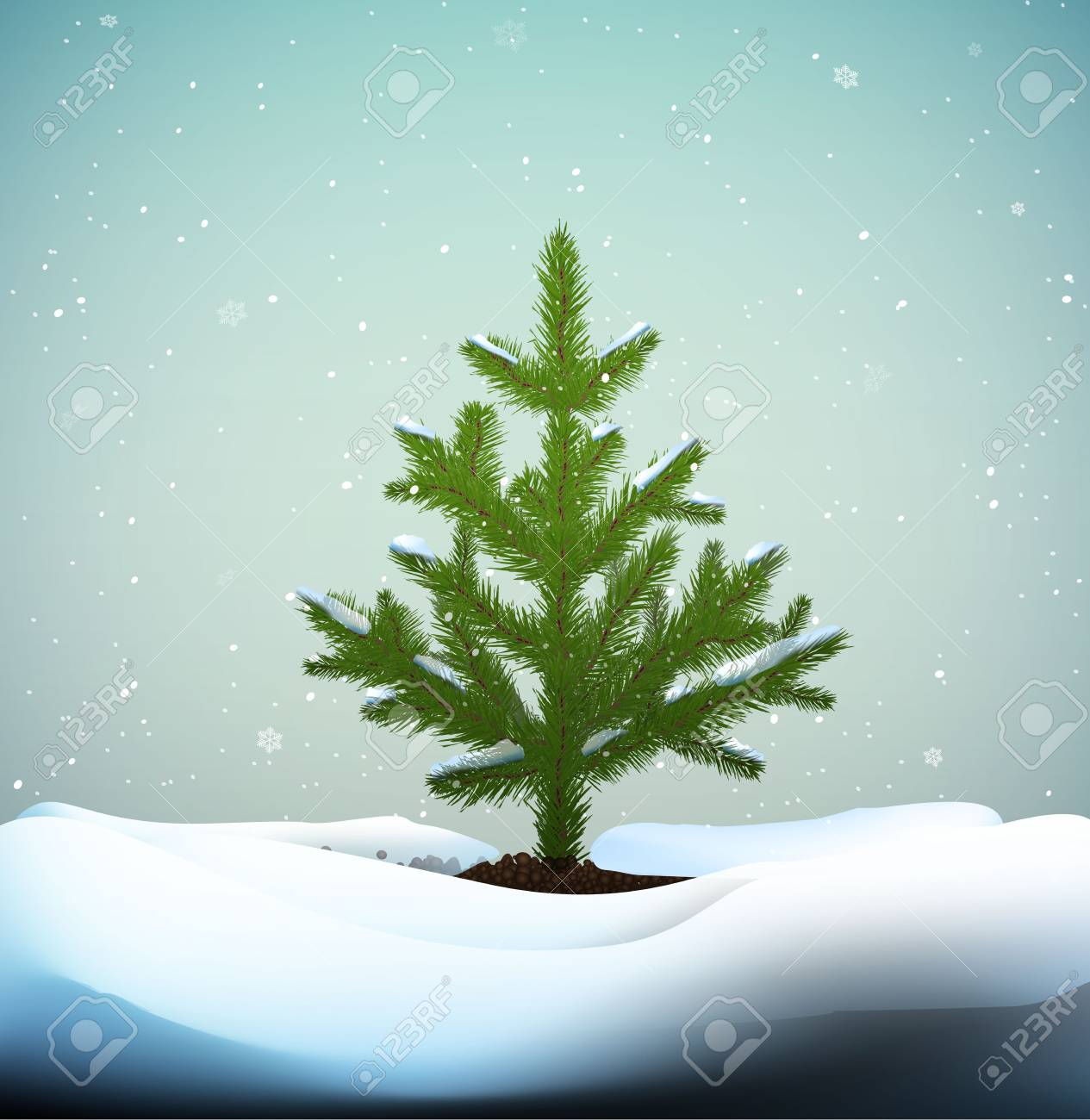 Small Christmas Trees Or Young Fir Tree Growing On Soil In Winter Royalty Free Cliparts Vectors And Stock Illustration Image 127129608