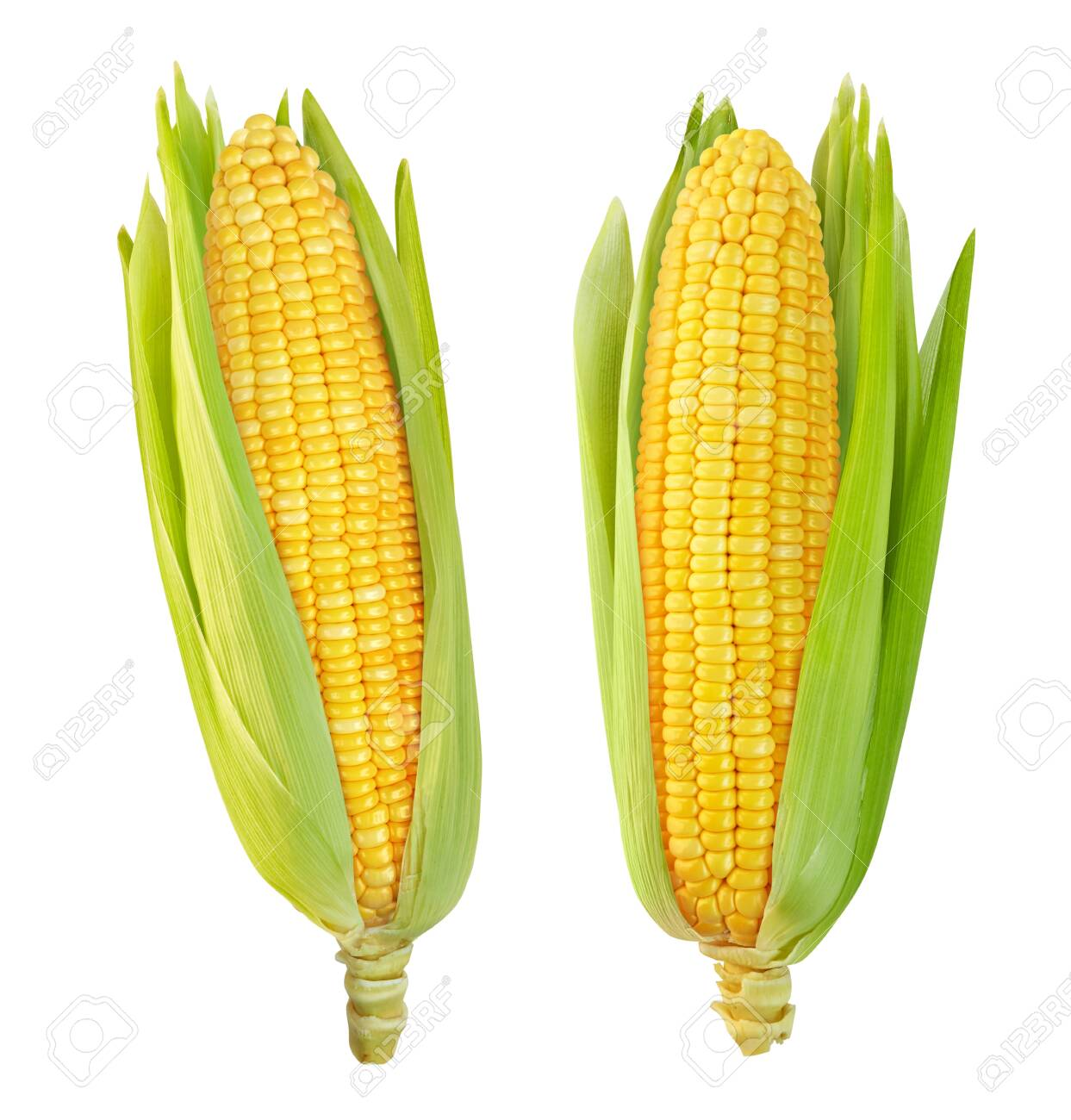 Corn isolated on a white background - 151108424
