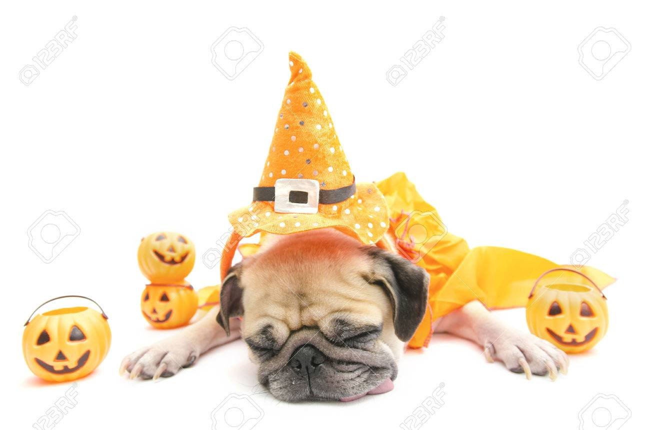 Fashion style Halloween Happy dog pictures for lady