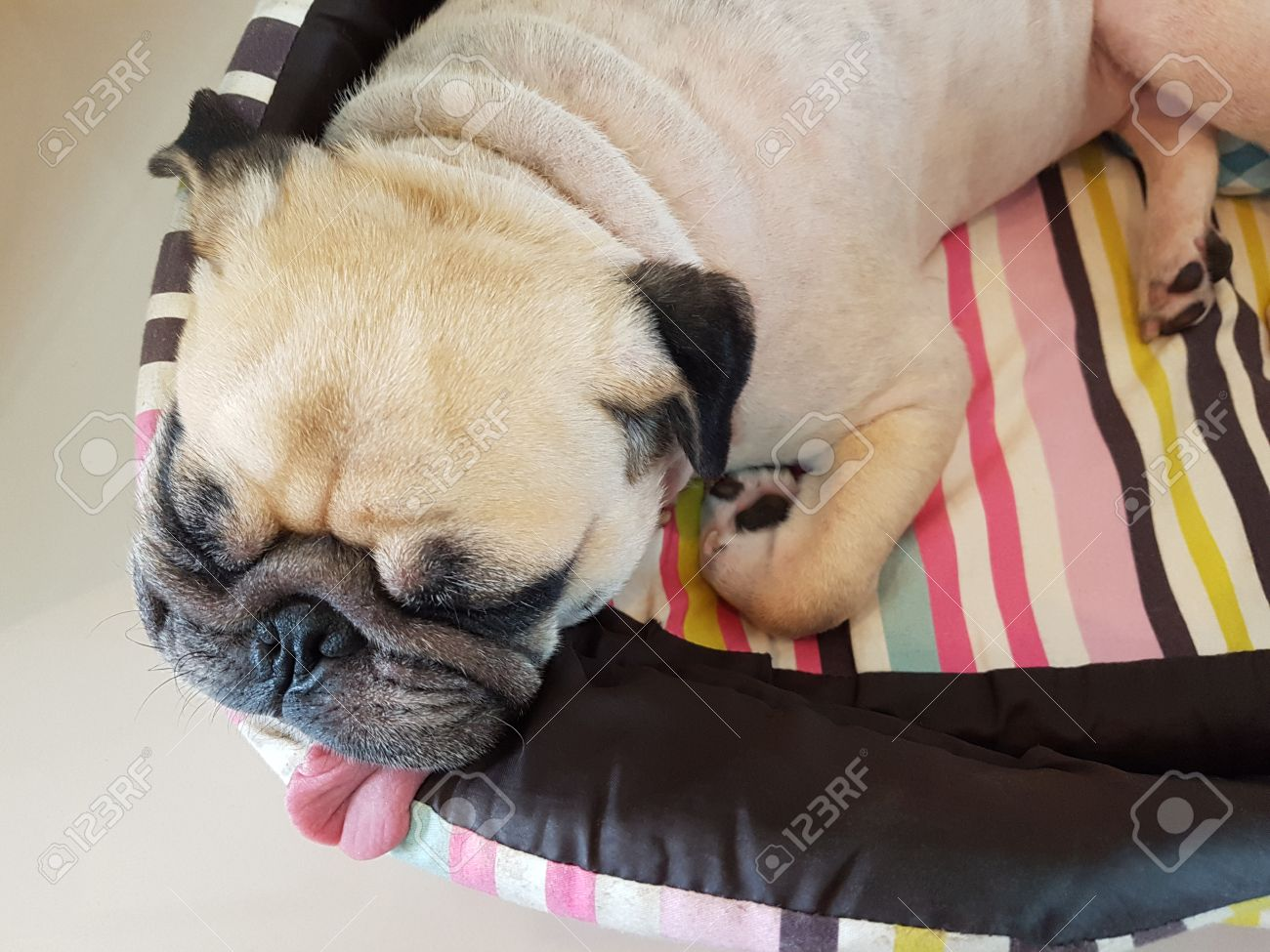 Close Up Face Cute Funny Puppy Pug Dog Sleep Rest Pillow