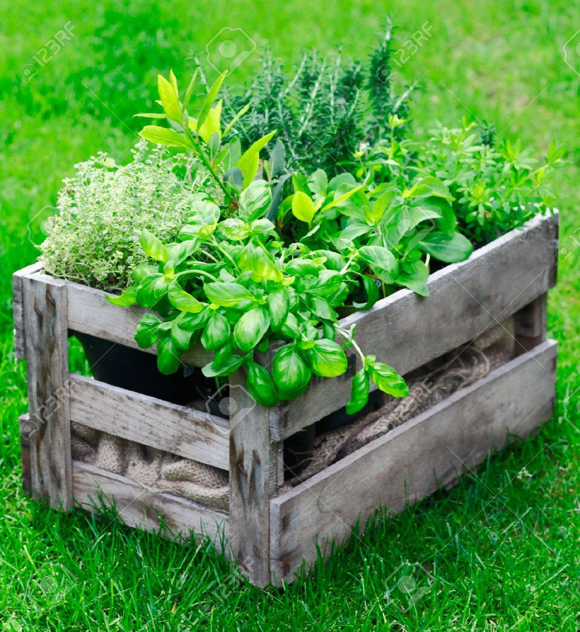 Ornamental Kitchen Garden Rustic Wooden Crate On A Lush Garden Lawn Filled With Fresh