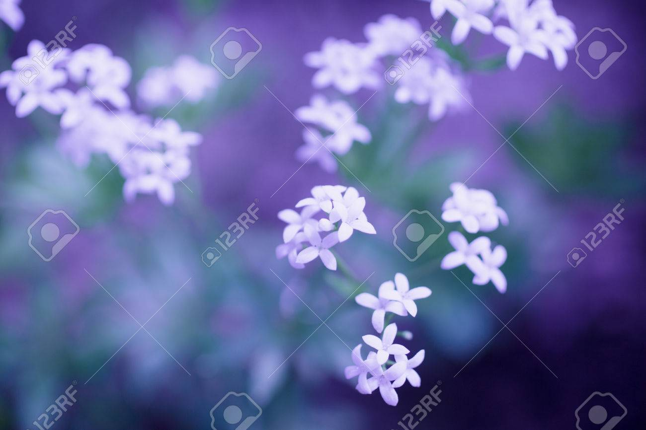 Delicate White Flowers Growing In Nature On A Blurred Ethereal Deep