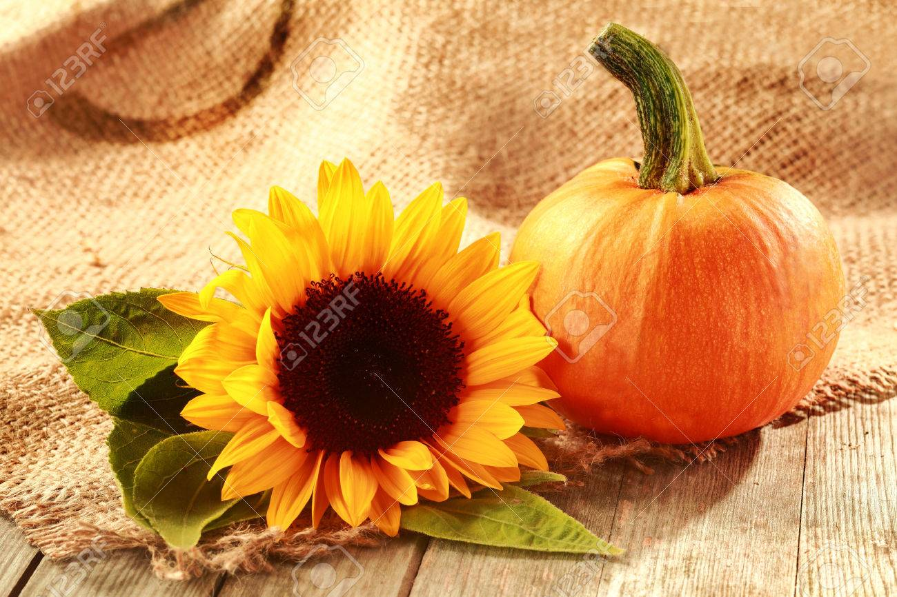 Rustic Thanksgiving Background With Copyspace And A Colorful Yellow Sunflower Fresh Pumpkin On Woven