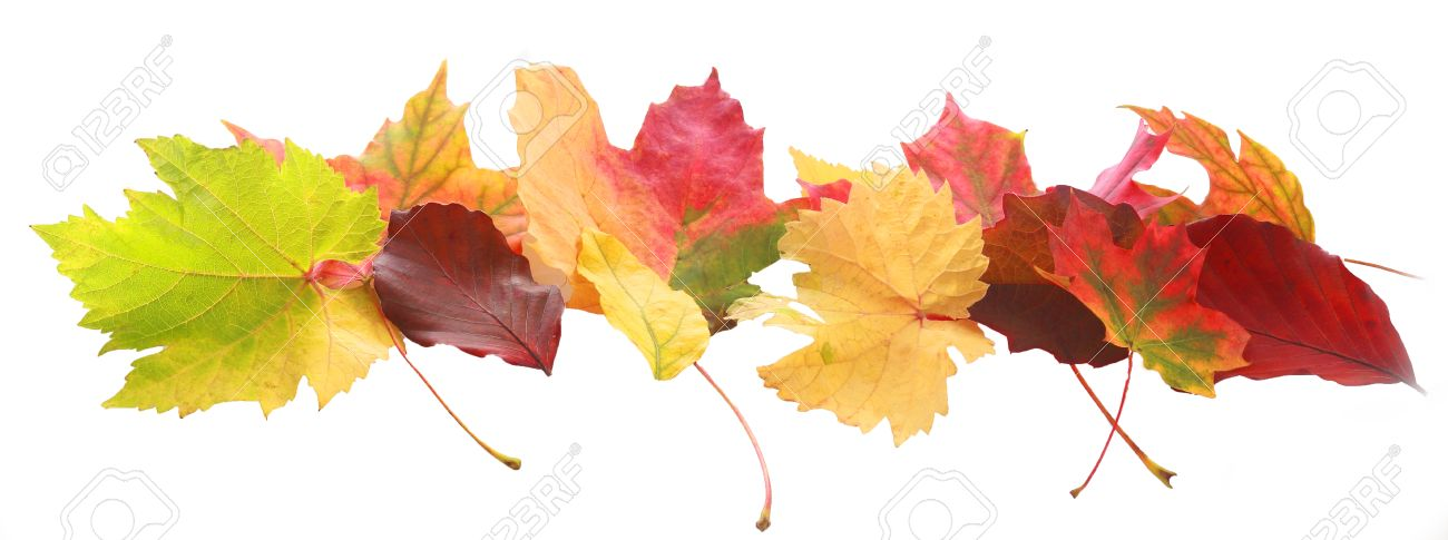 Horizontal Banner Of Colorful Autumn Or Fall Leaves Of Diverse.. Stock  Photo, Picture And Royalty Free Image. Image 31729269.