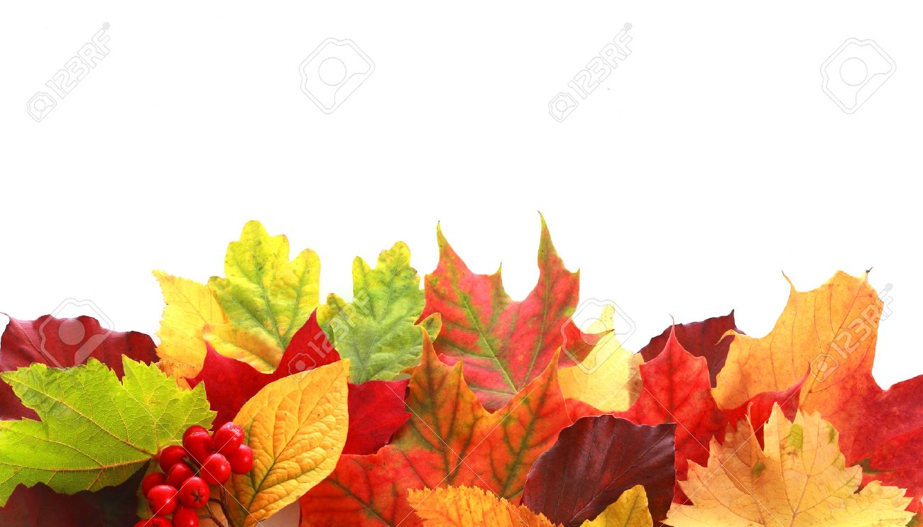 leaf images u0026 stock pictures royalty free leaf photos and stock