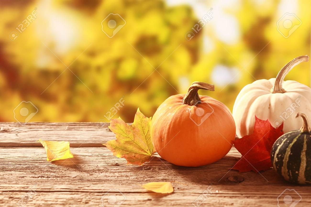 Frische Verschiedene Kürbis Und Squash In Einem Herbst Garten Mit ...