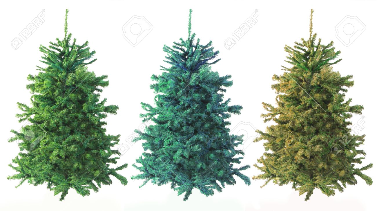 three evergreen trees of varying green color on white background