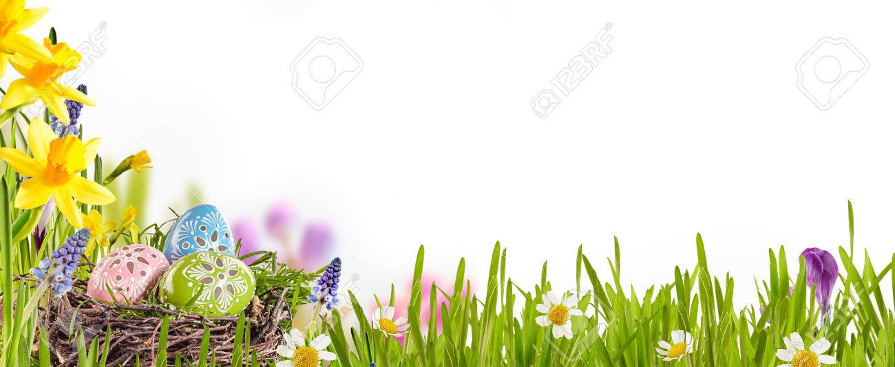 Decorated Easter eggs nestling in a birds nest amongst fresh green grass, yellow daffodils and daisies in a spring meadow forming a border over white with copy space - 51958108